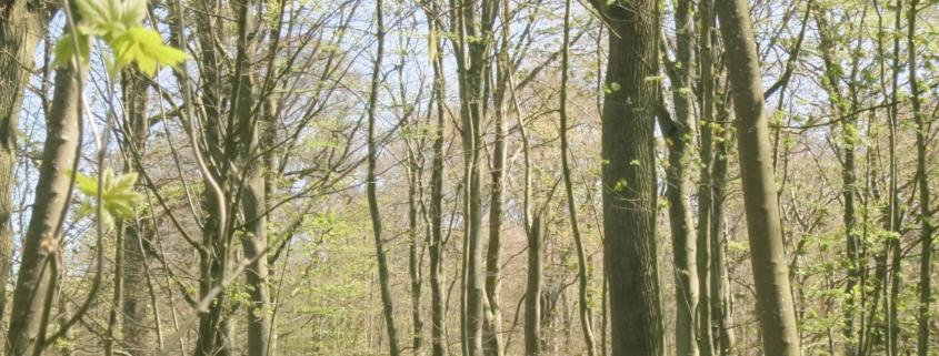 bokskogarna runt Genarp